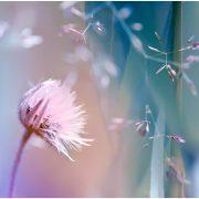 Delicate_flavour_by_valeriemonthuit