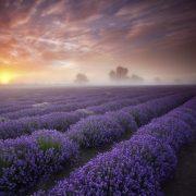 Lavender Tucson MBSR